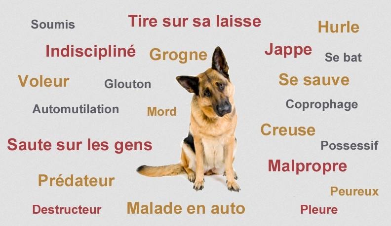 comportementaliste canin Autour des chens 29 Quimper Finistère