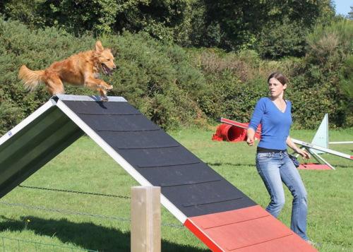 Morgan - Autour des chiens 29 et Giddi en agility à Plogonnec